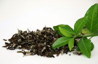 Better metabolic rates with Green Tea