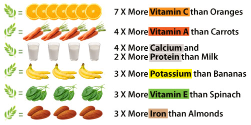 Vitamin C  |  Vitamin E  |  Calcium  |  Antioxidants  |   Multivitamin  |  Fish oil  |  Omega 3s  |